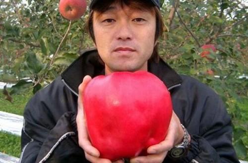 世界上最大的苹果售价228元一个