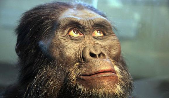 世界上最早出现的人类南方古猿现已灭绝